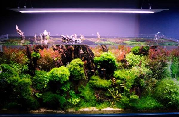 aquarium-setup
