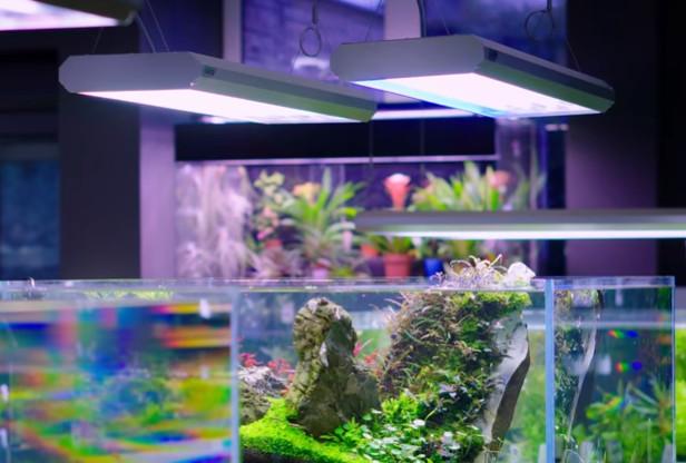 planted-aquarium-led-lighting