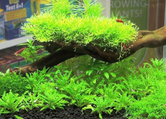 substrate-for-planted-tank